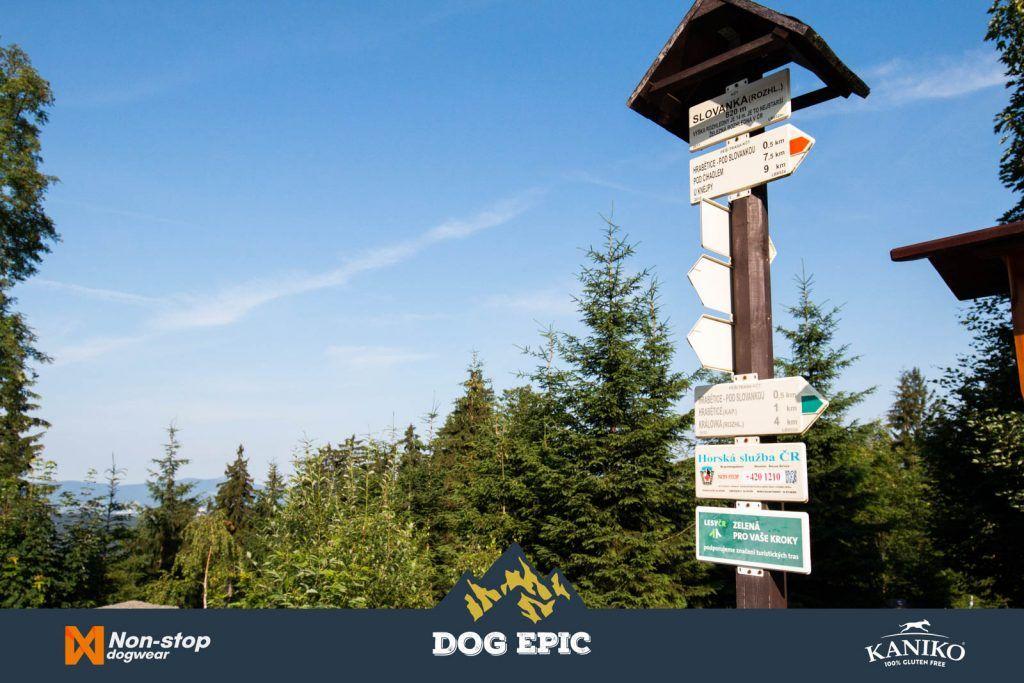 3900_dog_epic_0618