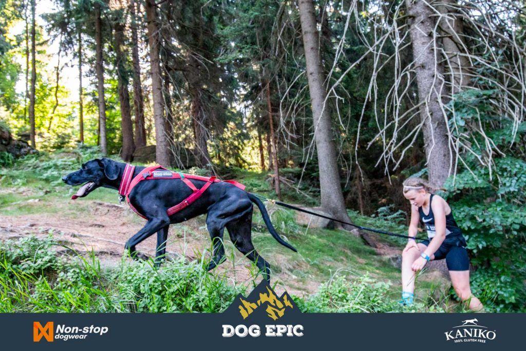 4022_dog_epic_0618